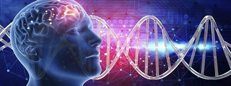 ¿Cómo afectan las drogas al cerebro?